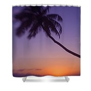 Palm Over The Beach Shower Curtain