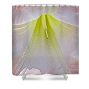 Peach Angel's Trumpet At Pilgrim Place In Claremont-california  Shower Curtain