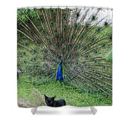 2 Peacocks And A Black Pussy Cat Shower Curtain