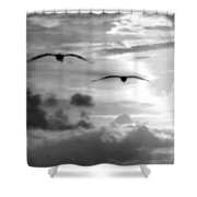 2 Pelicans Flying Into The Clouds Shower Curtain