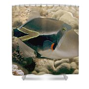 Picasso Triggerfish Shower Curtain