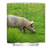 Pig In A Pasture Shower Curtain