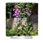 2 Pink Bell Flowers. Foxglove Shower Curtain