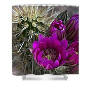 Pink Hedgehog Cactus  Shower Curtain