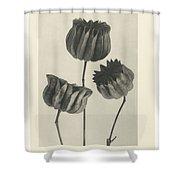 Plant Studies, 1928, Nature Series, By Karl Blossfeldt  Shower Curtain