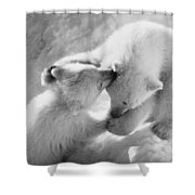 Polar Bear Cubs Shower Curtain