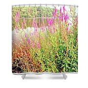 Pond In The Bershire Mountains, Massachusetts Shower Curtain