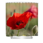 Poppies In Field In Spring Shower Curtain
