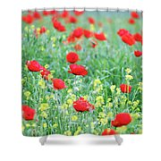 Poppy Flowers Meadow Spring Season Shower Curtain