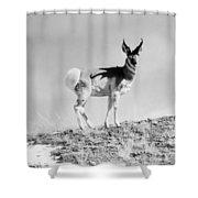 Prong-horn Antelope Shower Curtain