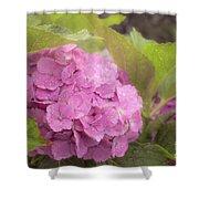 Purple Hydrangea At Rainy Garden In June, Japan Shower Curtain