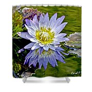 Purple Water Lily Pond Flower Wall Decor Shower Curtain