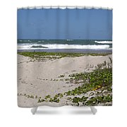 Railroad Vine And Sea Oats On The Atlantic In Florida Shower Curtain