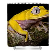 Red-eyed Treefrog, Xanthic Form Shower Curtain