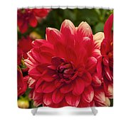 Red Flower Close Up Shower Curtain