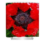 Red Poppy Photograph Shower Curtain