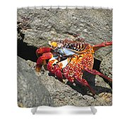 Red Rock Crab Shower Curtain