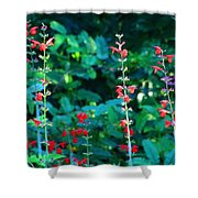 Red Salvias Shower Curtain