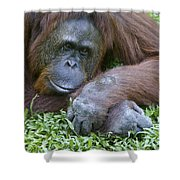 Relaxation Shower Curtain