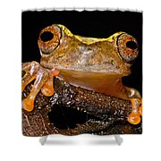 Ross Allens Treefrog Shower Curtain