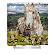 Rustic Horse Shower Curtain