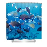 Saipan Marine Life Shower Curtain