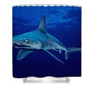 Sandbar Shark Shower Curtain