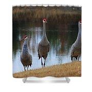 Sandhill Crane Family By Pond Shower Curtain