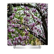 Saucer Magnolias In Central Park Shower Curtain
