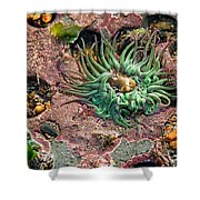 Sea Anemones Shower Curtain