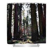 Sequoia National Park Shower Curtain