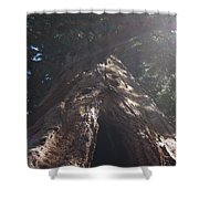 Sequoia Tree Shower Curtain