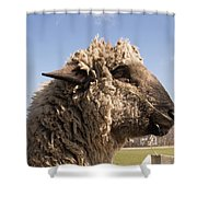 Sheep In Profile Shower Curtain
