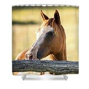 Single Horse Shower Curtain
