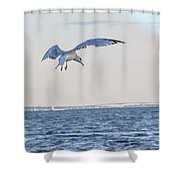 Jbhartgallery Shower Curtain