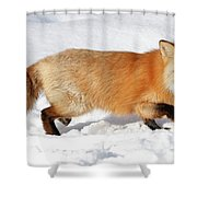 Sneaky Red Fox Shower Curtain