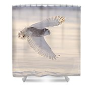 Snowy Owl In Flight Shower Curtain