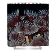 Social Feather Dusters Shower Curtain