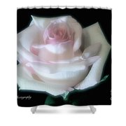 Soft Pink Rose Bud Shower Curtain