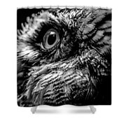 Spectacled Owl  Shower Curtain