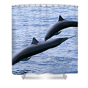 Spinner Dolphins Shower Curtain
