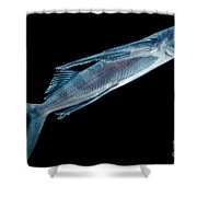 Spotfin Flyingfish Shower Curtain