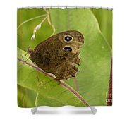 2-spotted Wood Nymph Shower Curtain