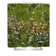 Springtime In South Africa Shower Curtain