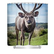 Sri Lankan Sambar Deer Male Shower Curtain