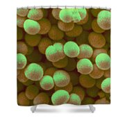 Staphylococcus Aureus Shower Curtain