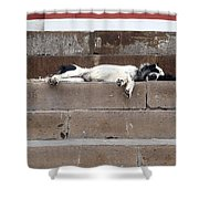 Street Dog Sleeping On Steps Shower Curtain