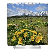 Teton Balsam Root Shower Curtain