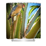 The Gila Woodpecker Shower Curtain