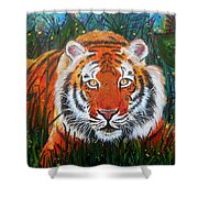Tiger- Large Work Shower Curtain